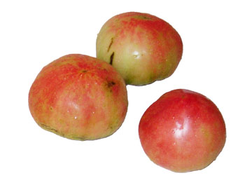 オランダトマト