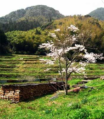 柳の水 山口県の名水
