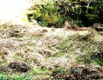 家にはだれも住んでいない状況で荒れ果ていきます。 石組みした畑・田も草や、木の根がはりだし崩壊